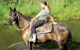 Stunning Aust Stock Gelding +VIDEO on HorseYard.com.au (thumbnail)