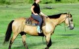 Quiet Buckskin Pure QH Gelding + VIDEO++ on HorseYard.com.au (thumbnail)