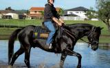 So Quiet Jet Black Stock Horse Gelding + VIDEO+ on HorseYard.com.au (thumbnail)