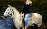 Quiet Blue Stock Horse Gelding + VIDEO+ on HorseYard.com.au (thumbnail)