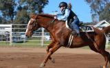 Educated Gelding on HorseYard.com.au (thumbnail)