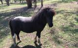 Lawn Mower called Merlin! on HorseYard.com.au (thumbnail)