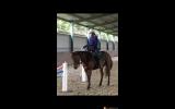 Versatile All Rounder on HorseYard.com.au (thumbnail)