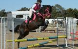 Stunning Eventer With Top Potential  on HorseYard.com.au (thumbnail)