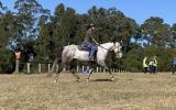 ASH Grey Gelding on HorseYard.com.au (thumbnail)
