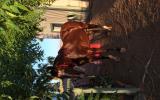Perfect Allrounder on HorseYard.com.au (thumbnail)