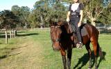 Bay standard gelding 16hh, 5 year old on HorseYard.com.au (thumbnail)