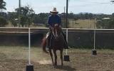 Beautiful QH xTB Ruby on HorseYard.com.au (thumbnail)