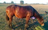 Peter Alford on HorseYard.com.au (thumbnail)