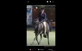 Stunning Black gelding on HorseYard.com.au (thumbnail)