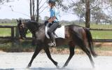 Lovely quiet project mare on HorseYard.com.au (thumbnail)