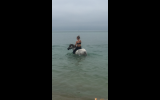 Lakevale Toy Dancer- Ultimate Allrounder pony on HorseYard.com.au (thumbnail)