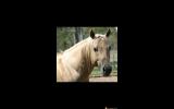 Tamulena Freckles/Buclena Bloodlines on HorseYard.com.au (thumbnail)