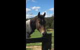 Quality young horse on HorseYard.com.au (thumbnail)