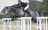 In foal to Corelli (Imp) on HorseYard.com.au (thumbnail)