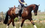 Super moving mare on HorseYard.com.au (thumbnail)