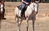 Registered Paint Mare - Great temperament, well educated on HorseYard.com.au (thumbnail)