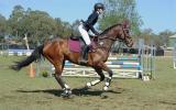 Confident Allrounder on HorseYard.com.au (thumbnail)