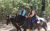 Mr WIZZ Blue Roan Appi on HorseYard.com.au (thumbnail)