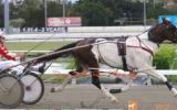 Skewbald Standardbred Stallion on HorseYard.com.au (thumbnail)