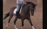 Lovely Horse for Free Lease / Horse Share ASAP!!! on HorseYard.com.au (thumbnail)