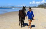 Exceptional Stock Horse on HorseYard.com.au (thumbnail)