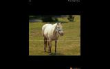 Few Spot Mare on HorseYard.com.au (thumbnail)
