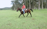 Standardbred gelding on HorseYard.com.au (thumbnail)