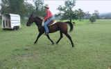 Sweet natured gelding  on HorseYard.com.au (thumbnail)