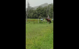 Quiet stunning bay gelding on HorseYard.com.au (thumbnail)