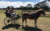Welsh Mountain Pony on HorseYard.com.au (thumbnail)