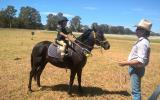 DUAL REG Riding pony - educated on HorseYard.com.au (thumbnail)