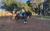 ( Secret )  15.2hh , 9yo, mare , thoroughbred, all rounder on HorseYard.com.au (thumbnail)