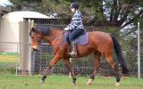 Perfect Beginners Horse on HorseYard.com.au (thumbnail)