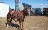 Best horse ever on HorseYard.com.au (thumbnail)