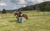 Bondi on HorseYard.com.au (thumbnail)