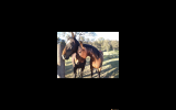 Thoroughbred mare  on HorseYard.com.au (thumbnail)