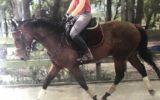 Thoroughbred gelding, very quiet  on HorseYard.com.au (thumbnail)