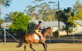 Quiet heritage Stockhorse mare on HorseYard.com.au (thumbnail)