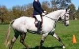 Price Reduce Stunning Warmblood Mare on HorseYard.com.au (thumbnail)