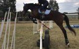 Talented showjumper or eventer  on HorseYard.com.au (thumbnail)