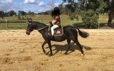 12hh quiet child's lead rein pony on HorseYard.com.au (thumbnail)