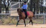 Beauty and Brains on HorseYard.com.au (thumbnail)