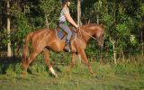 Talented Part Welsh on HorseYard.com.au (thumbnail)