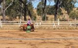 Registered qh mare on HorseYard.com.au (thumbnail)