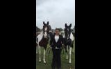 Skewbald standardbred mare on HorseYard.com.au (thumbnail)