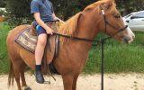Project Pony  on HorseYard.com.au (thumbnail)
