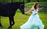 Breeding, Show, or riding prospect on HorseYard.com.au (thumbnail)