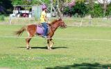 beautiful Welsh / Australina pony gelding on HorseYard.com.au (thumbnail)