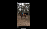 YQS Wats It To you  on HorseYard.com.au (thumbnail)